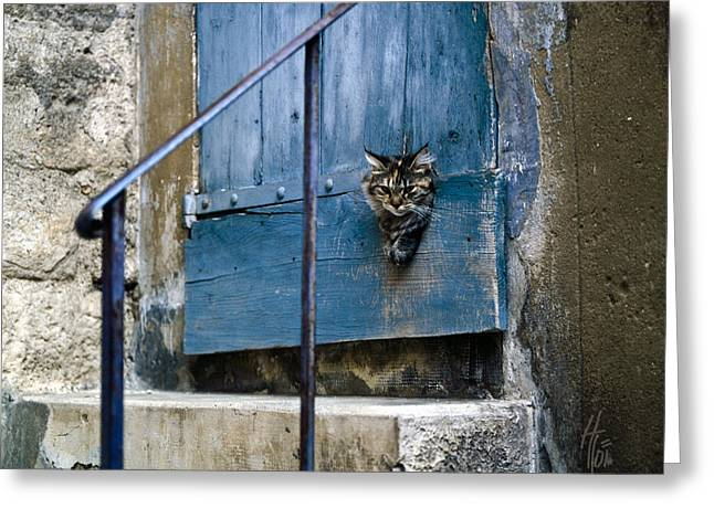 Stepping Stones Greeting Cards - Blue Door with Pet Outlook Greeting Card by Heiko Koehrer-Wagner