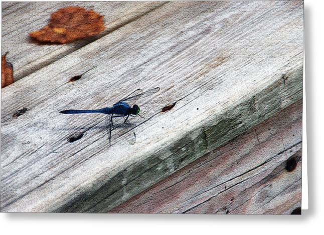 Blue Dragonfly Greeting Card by Aimee L Maher Photography and Art Visit ALMGallerydotcom