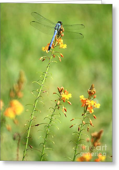 Flying Insects Greeting Cards - Blue Dragonfly in the Flower Garden Greeting Card by Carol Groenen
