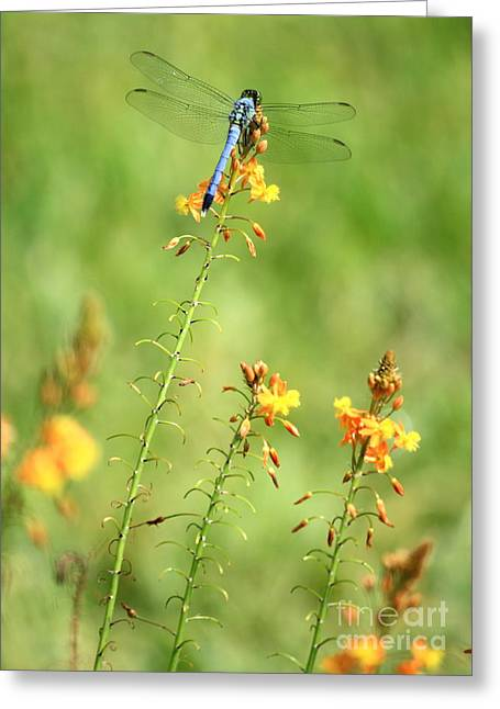 Blue Dragonfly In The Flower Garden Greeting Card by Carol Groenen