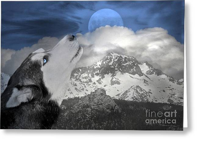 Sled Dogs Greeting Cards - Blue Eyed and Moon Greeting Card by Stephanie Laird