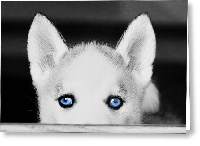 Blue Eyed Huskie Greeting Card by Susan Stone