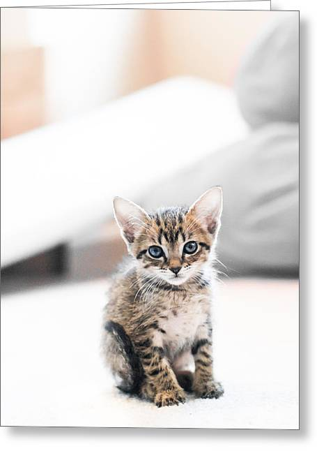 Kittens Greeting Cards - Blue Eyed Kitten Greeting Card by Shelby  Young