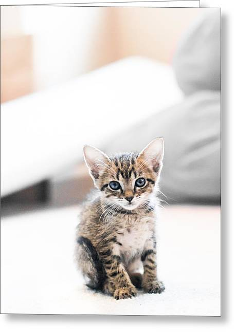 Blue Eyed Kitten Greeting Card by Shelby  Young