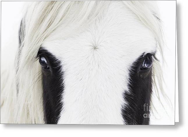 Wild Horses Greeting Cards - Blue Eyes Greeting Card by Carol Walker