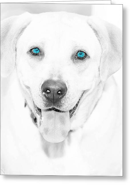 Best Friend Pyrography Greeting Cards - Blue Eyes Greeting Card by Gib LaStrapes