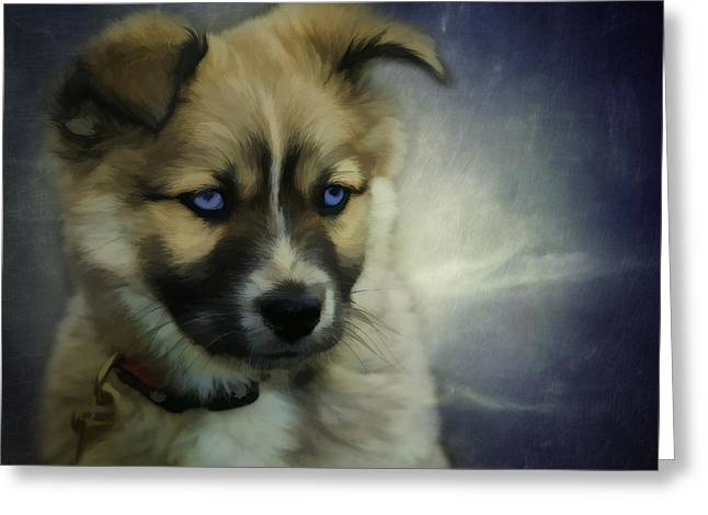 Blue Eyes Greeting Card by Jacque The Muse Photography
