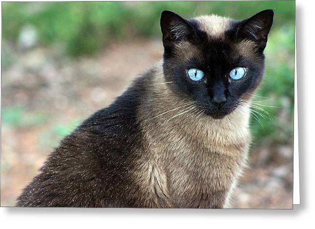 Kelly Photographs Greeting Cards - Blue Eyes Greeting Card by Kelly Howe