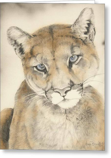 Wildcats Drawings Greeting Cards - Blue Eyes Greeting Card by Lori Brackett