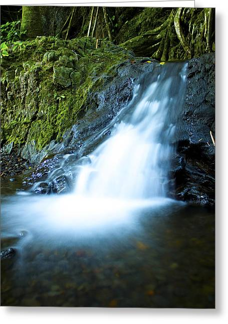 Tree Huggers Greeting Cards - Blue Falls off the Beaten Path Greeting Card by Bryant Coffey