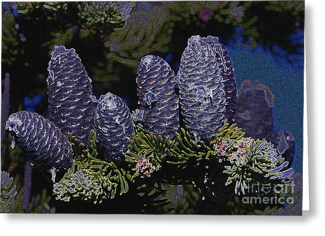 Blue Fir Cones 2 outlined Greeting Card by Sharon  Talson