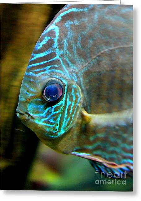 Aquarium Fish Greeting Cards - Blue Fish - Digital Painting Greeting Card by Carol Groenen
