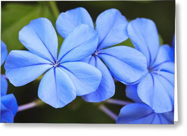 Interior Still Life Greeting Cards - Blue Flax Greeting Card by Adam Romanowicz