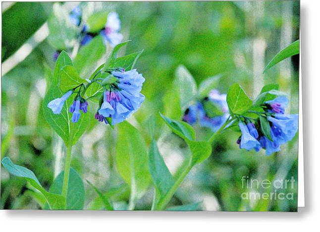 Indiana Flowers Greeting Cards - Blue Flower Study Greeting Card by Alys Caviness-Gober