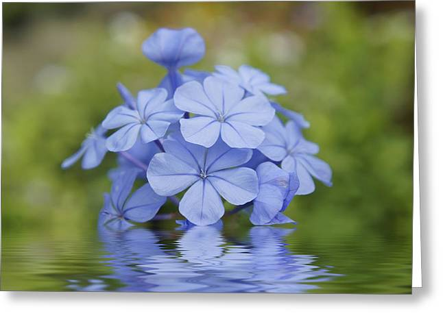 Tropical Leaves Greeting Cards - Blue Flowers Greeting Card by Aged Pixel