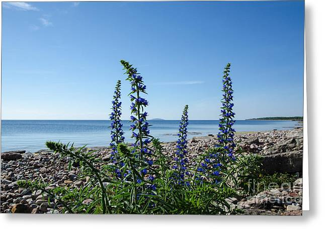 Tion Greeting Cards - Blue flowers at a calm bay by a stony coastline Greeting Card by Kennerth and Birgitta Kullman