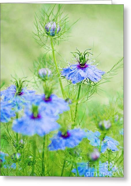 Green Living Greeting Cards - Blue flowers Greeting Card by Diana Kraleva