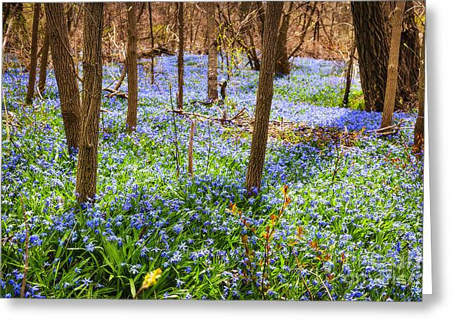 March Greeting Cards - Blue flowers in spring forest Greeting Card by Elena Elisseeva