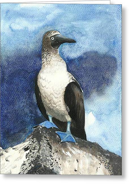 Recently Sold -  - Seabirds Greeting Cards - Blue Footed Booby bird on a rock Greeting Card by Shweta  Mahajan