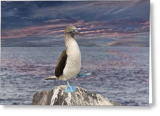 Brown Booby Greeting Cards - Blue Footed Booby Mating Dance in the Galapagos Greeting Card by Angela A Stanton