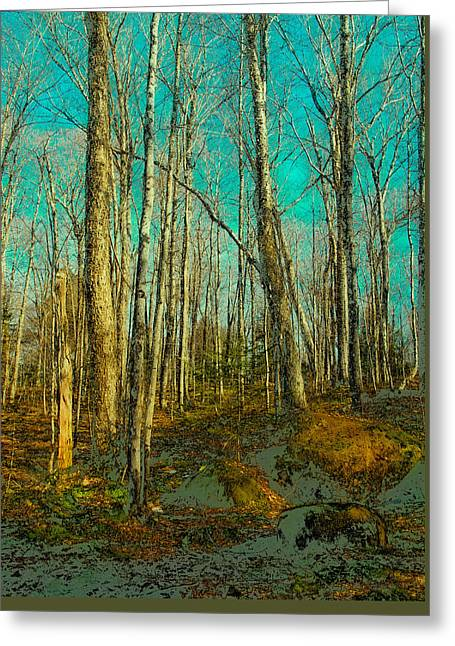 Blue Forest Greeting Card by David Patterson