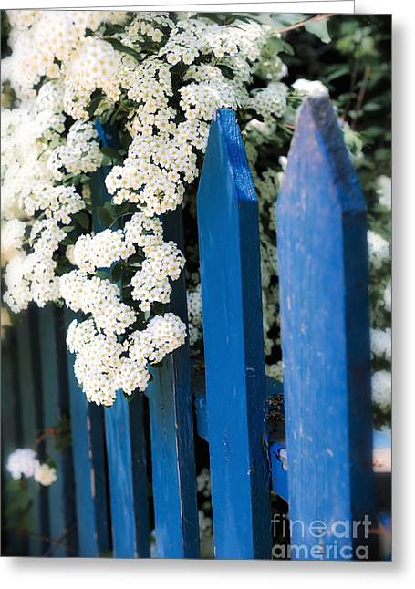 Lifestyle Photographs Greeting Cards - Blue garden fence with white flowers Greeting Card by Elena Elisseeva