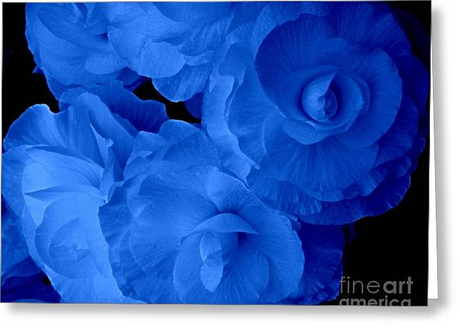 Blue Begonias Greeting Cards - Blue Glow Begonias Greeting Card by Joan-Violet Stretch