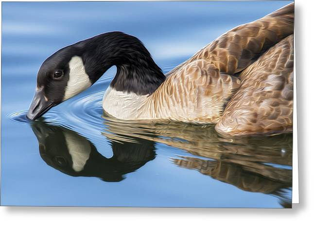 Wild Geese Greeting Cards - Blue Goose Reflecting Greeting Card by Bill Tiepelman