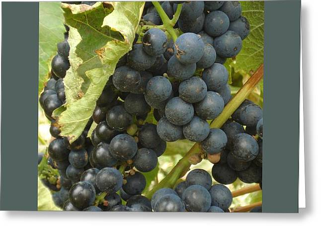 Blue Grapes Greeting Card by Patricia Overmoyer