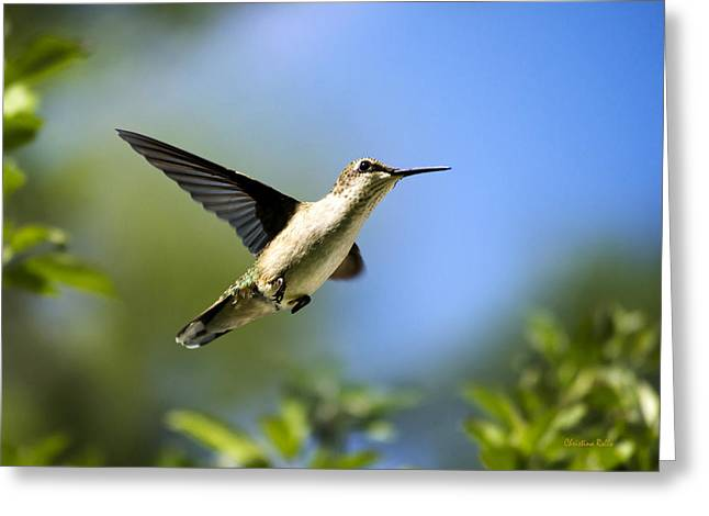 Hovering Greeting Cards - Blue Green Hummingbird Art Greeting Card by Christina Rollo