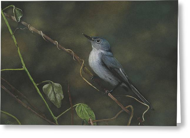 Prisma Colored Pencil Greeting Cards - Blue-grey Gnatcatcher Drawing Greeting Card by Eric Allen