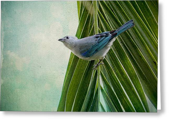 Bird On Tree Greeting Cards - Blue Grey Tanager on a Palm Tree Greeting Card by Peggy Collins