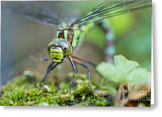Dragonfly Eyes Greeting Cards - Blue Hawker Dragonfly Greeting Card by Martin Capek