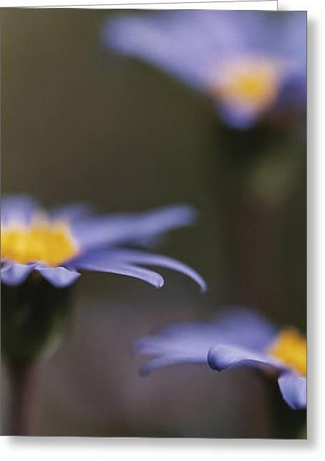 Blue Haze II Greeting Card by Caitlyn  Grasso