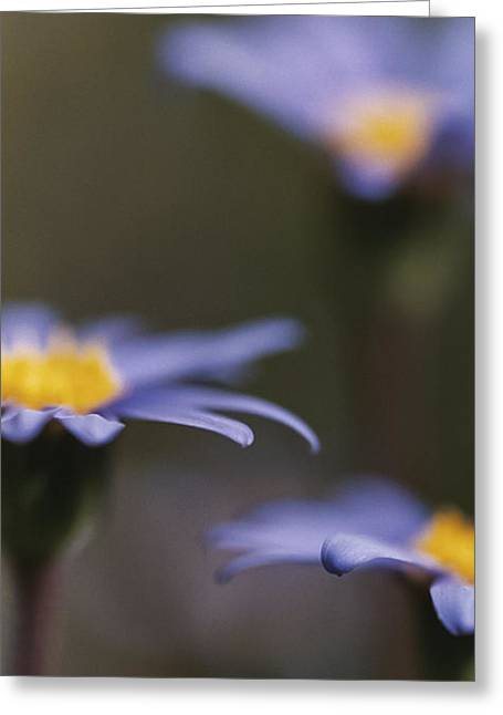 Haze Photographs Greeting Cards - Blue Haze II Greeting Card by Caitlyn  Grasso