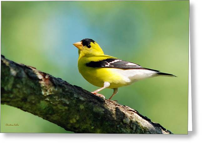 Blue Heart Goldfinch Greeting Card by Christina Rollo