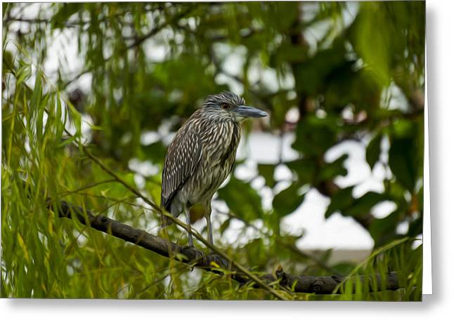 Fauna Digital Greeting Cards - Blue Heron Greeting Card by Aged Pixel