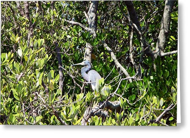 Blue Heron Greeting Card by Aimee L Maher Photography and Art Visit ALMGallerydotcom