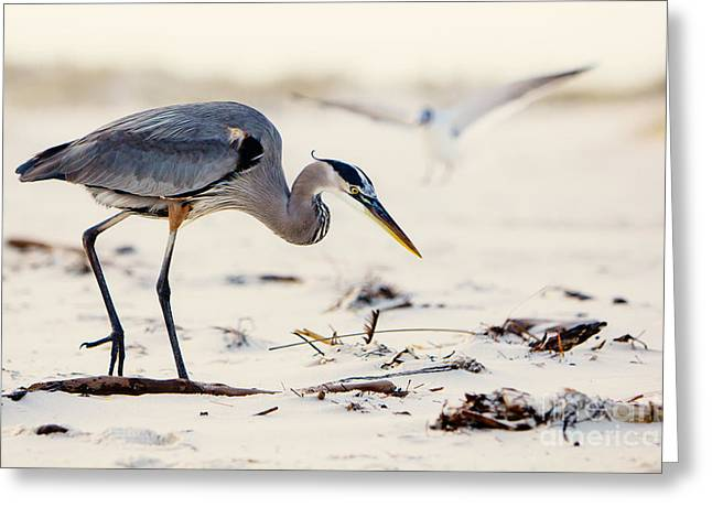 Blue Heron At The Beach Greeting Card by Joan McCool