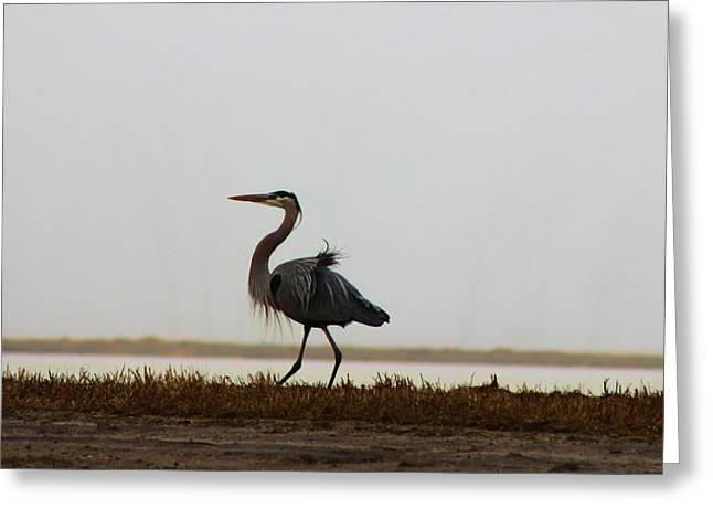 Plies Greeting Cards - Blue Heron by the Pond Greeting Card by Jane Lassiter  Boahn