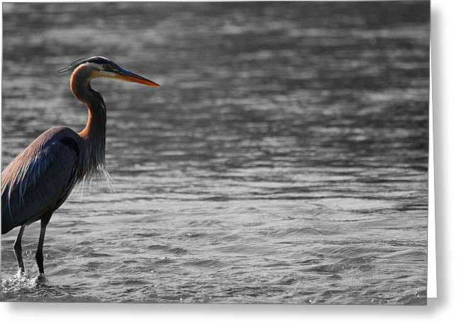 D Wade Greeting Cards - Blue Heron  Greeting Card by Dan Sproul