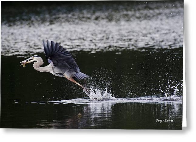 Roger Lewis Greeting Cards - Blue Heron Fishing Greeting Card by Roger Lewis
