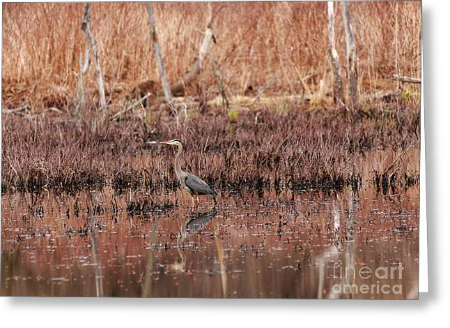 Reflections In River Greeting Cards - Blue Heron in the Golden Hour Greeting Card by Mary Lou Chmura