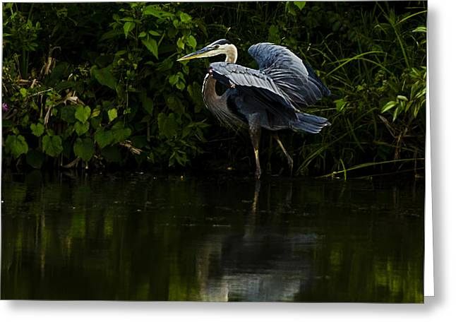 Ohio Pyrography Greeting Cards - Blue Heron in the Light Greeting Card by Shirley Tinkham