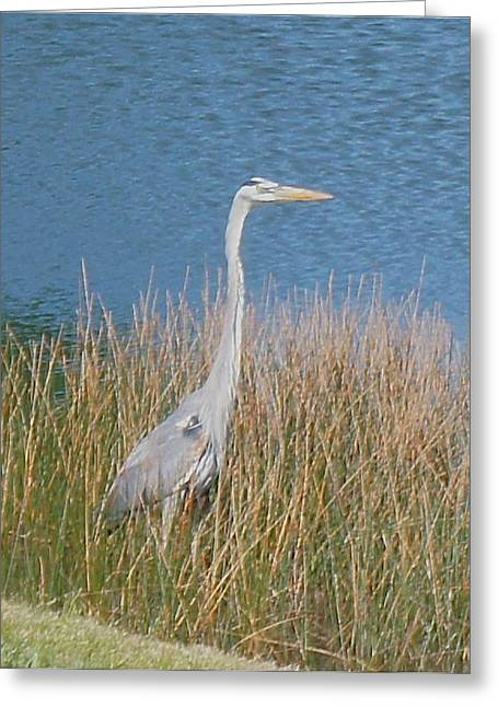 Kristine Bogdanovich Greeting Cards - Blue Heron Greeting Card by Kristine Bogdanovich