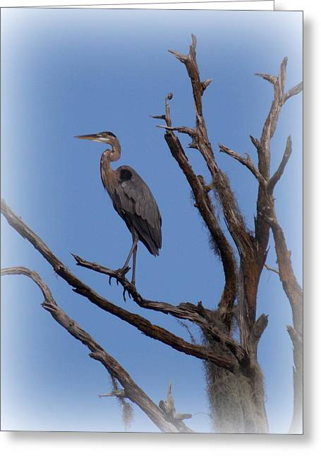 Great Blue Heron Framed Print Greeting Cards - Blue Heron Perch 2 Greeting Card by Sheri McLeroy