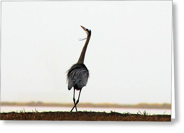 Plies Greeting Cards - Blue Heron Plie Greeting Card by Jane Lassiter  Boahn