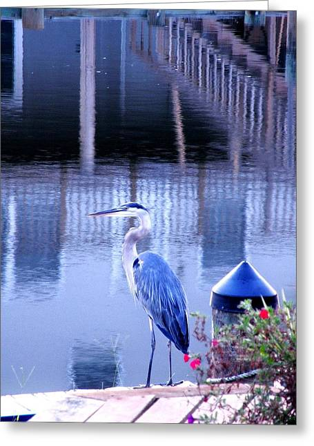 Great Blue Heron Greeting Cards - Blue Heron Reflections Greeting Card by Kim Bemis