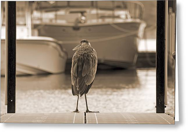 Purchase Photography Online Greeting Cards - Blue Heron Sepia Greeting Card by Steven  Michael