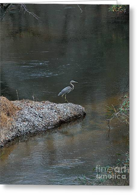 Kinds Of Birds Greeting Cards - Blue Heron Greeting Card by Skip Willits